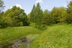 长得太大的森林池塘 免版税库存照片