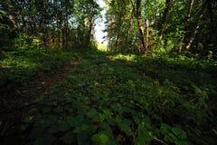 长得太大的森林 免版税库存照片