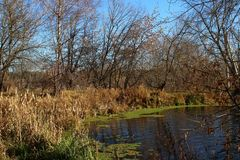 长得太大的秋天池塘 免版税图库摄影