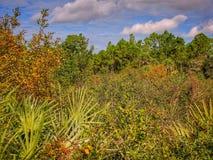 长得太大的草甸在佛罗里达 免版税库存照片