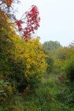 长得太大的道路在10月 库存照片