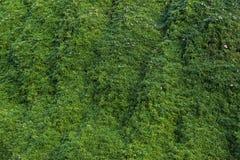 长得太大的绿色密林 库存照片