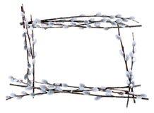 长方形框架的pussywillow 库存照片