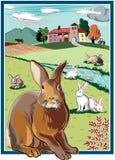 长方形框架,用兔子 免版税库存照片