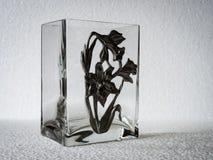 长方形玻璃花瓶 库存照片