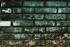 长期砖墙在阳光下和雨 夺取生物的地衣是一个奇怪的图象给漫游的人民 免版税库存照片