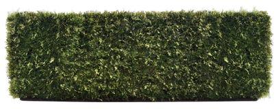 长期被隔绝的绿色篱芭 库存照片