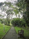 长木凳公园在步行方式附近的美丽的绿色庭院里 免版税库存照片