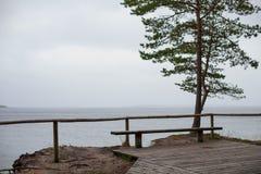 长木凳和一棵偏僻的俯视灰色海的杉树 图库摄影