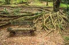 长木凳和根 库存照片