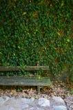 长木凳和greenwall特写镜头 免版税图库摄影