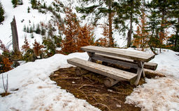 长木凳在早期的春天 免版税图库摄影