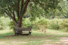 长木凳在果树园 库存图片