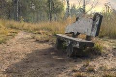 长木凳在森林里 免版税库存照片