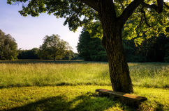 长木凳在结构树下 免版税库存照片
