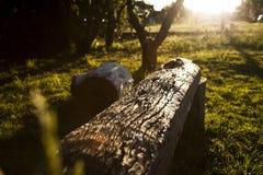 长木凳在阳光下 库存图片