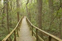 长木板走道的森林 库存照片