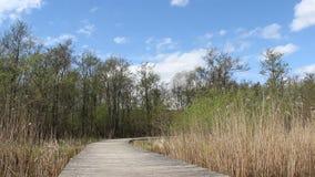 长木桥横渡沼泽地和有风 股票视频