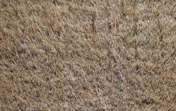 长毛的地毯纹理 库存图片