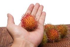 长毛的果子红毛丹印度尼西亚在手中 库存照片