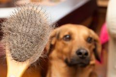 长毛的狗刷子 图库摄影