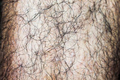 长毛的男性腿 免版税库存图片