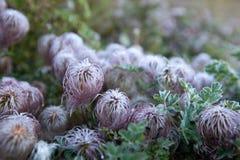 长毛的花在庭院里 免版税库存图片