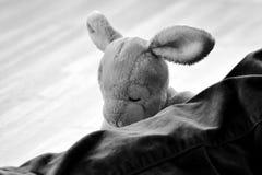 长毛绒兔宝宝 图库摄影