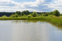 长满与芦苇湖边在一好日子 库存照片