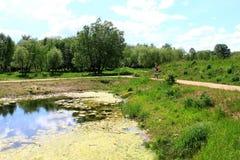 长满与草池塘在城市公园 库存照片