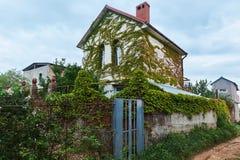 长满在绿色常春藤装饰植物乡下白色房子里 免版税库存图片