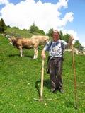年长牧羊人在有母牛的绿色高山牧场地 图库摄影