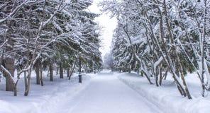 长的公园在冬天 免版税库存照片