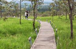 长的具体曲线路横穿草甸在典型森林里 免版税图库摄影