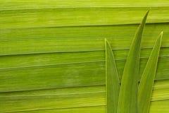 长的叶子背景 免版税库存照片
