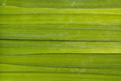 长的叶子背景 免版税库存图片