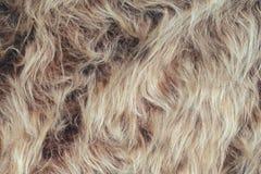 长的堆毛皮背景 免版税库存照片