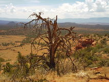 长的峡谷足迹Sedona亚利桑那上面  库存图片