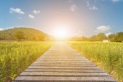 长的木桥梁和美好的阳光和花,有选择性的fo 库存照片