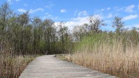 长的木桥横渡沼泽地 股票视频