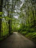 长的柏油路通过森林 库存照片