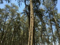 长的树秀丽 库存图片