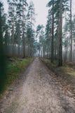 长的森林道路 免版税图库摄影