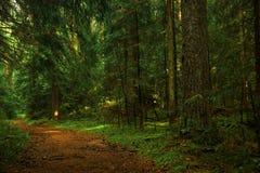 长的步行在森林是伟大的 库存照片