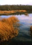 长的池塘-南安普敦, NY 免版税库存照片
