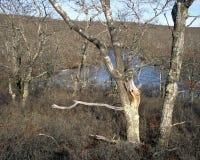长的池塘 免版税库存照片