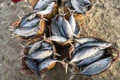 长的海氏,越南- 2016年7月03日:在竹篮子的新鲜的金枪鱼在海滩的长的海氏鱼martket 免版税库存照片