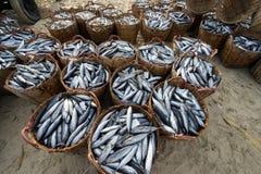长的海氏,越南- 2016年7月03日:在竹篮子的鲜鱼在长的海氏钓鱼在海滩的martket 库存照片