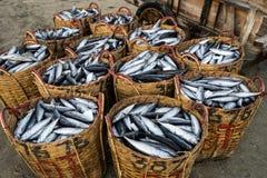 长的海氏,越南- 2016年7月03日:在竹篮子的鲜鱼在长的海氏钓鱼在海滩的martket 库存图片