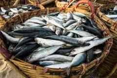 长的海氏,越南- 2016年7月03日:在篮子的鲜鱼待售在一个长的海氏海滩市场上 免版税库存照片